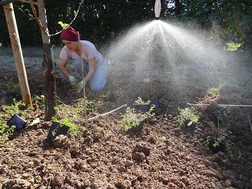 image Irrigation_Menthe.jpg (0.3MB)