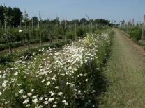 image melange_verger.jpg (0.7MB) Lien vers: http://www.plantonsledecor.fr/produits/prairies-fleuries/melange-verger